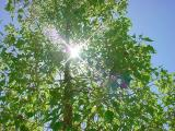 sun, tree, heaven, God