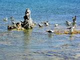 Birds and monolith