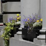 Flowers & Cement