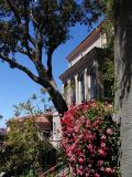 Geraniums & Tree