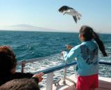 Child feeding seagulls on Long Beach July 4, 2003 Harbor cruise