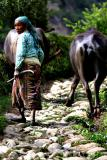 NEPAL-0009