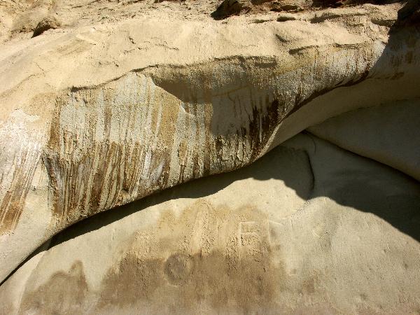 Torrey Pines Reserve