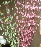 August 24 2003: Floral Display