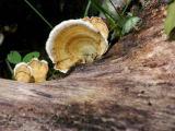 Lichen Fungus !