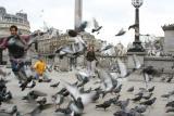 mad_birds_and_englishmen