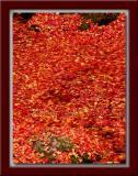 Leaf Blanket