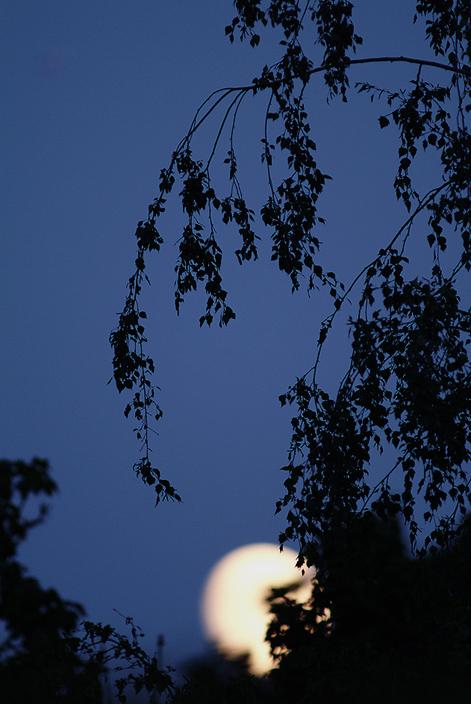 DSCF1985_Moonrise.jpg