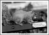 reserved for nuts3.jpg