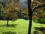 Lauterbrunnen Green