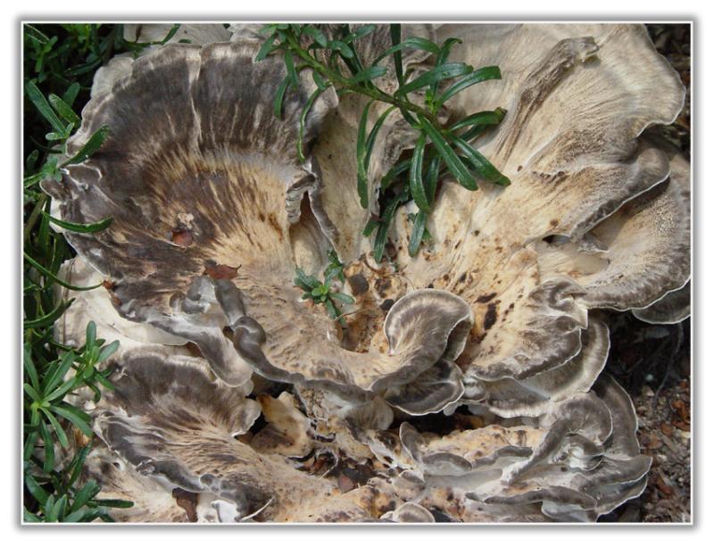 A Fungus Amungus