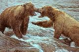 Bear-Play