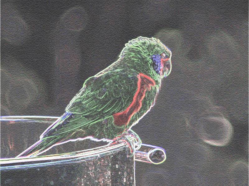 Parrot-sketch