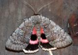 sleepy-underwing-6978.jpg