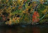 autumn-maple-8055.jpg