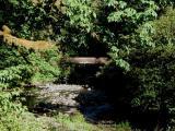 Bridge at Silver Falls State Park