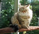 Taikku enjoys the sunny fall day...
