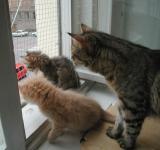 Pikku, Riki And mom Roosa following the street traffic