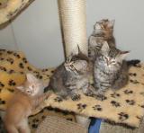 Riki and three girls