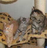 Riki, Blue and Hulda