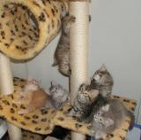 All kittens