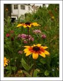 In a Flower Garden on Avenue M