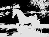 horsing around.jpg(496)