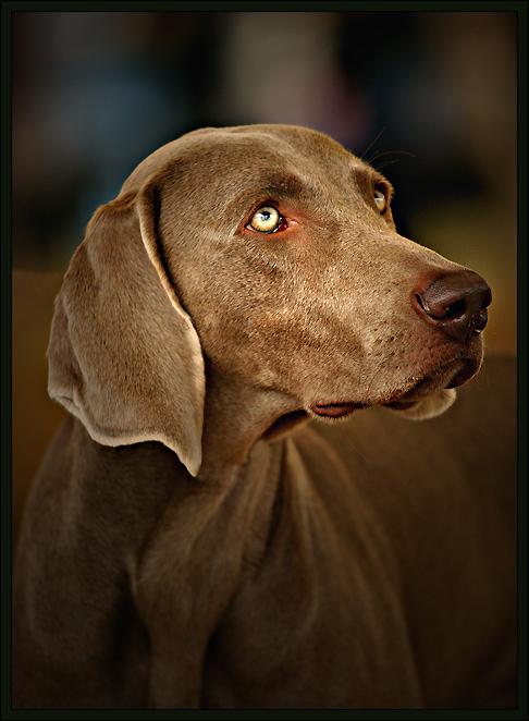 Handsome-Dog.jpg