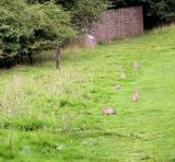 Rabbits (and their droppings) seem to be everywhere