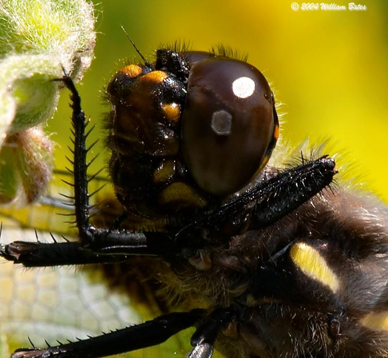 Dragonfly f16 100 crop.jpg