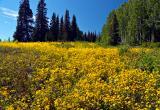 Manti-Lasal Wild Flowers1.jpg