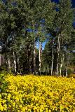 Manti-Lasal Wildflowers2.jpg