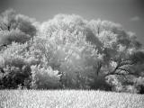 First attempt as using IR filter.