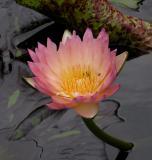 MoBo Garden 03(37).jpg