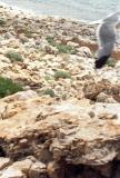 Problem Gull