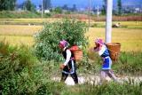 working in the fields.jpg
