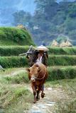 farmer near Miao village