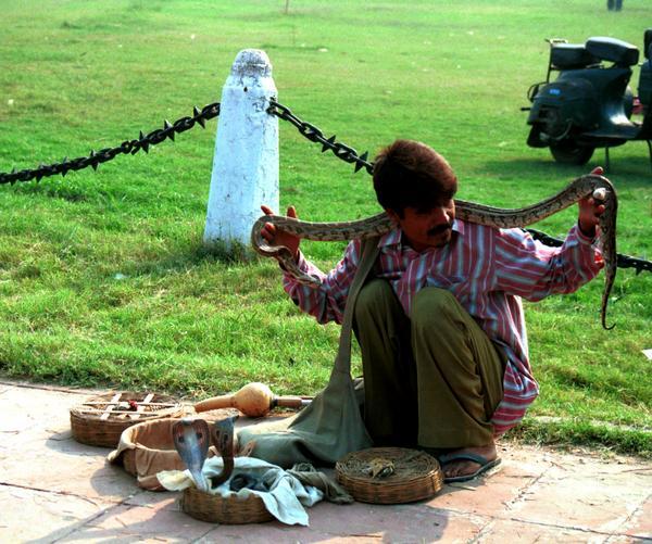 delhi snake charmer