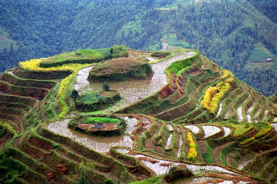Longsheng rice terraces 1.jpg