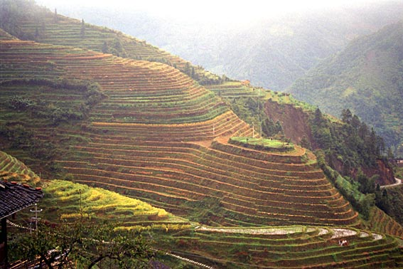 Longsheng rice terraces 2.jpg