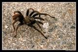 spider Kopie.jpg