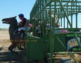 Birdsville starting barriers racing here we go