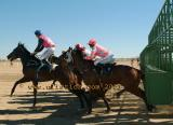 Birdsville starting barriers racing