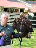 Im.bald.eagle