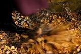 Kicking through the leaves