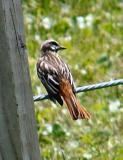 Rare Bird Sightings