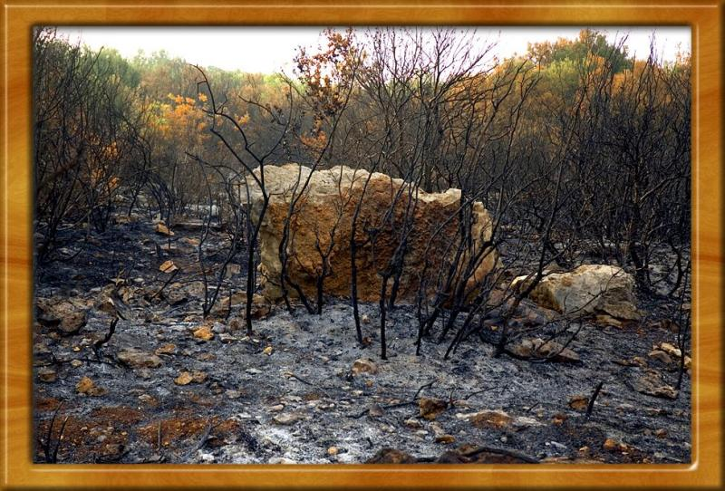 Fire In My Forest