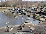 duck pond, Reykjavik Botanical Garden