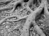 Roots Of Nature