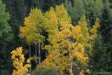 Fall Colorado